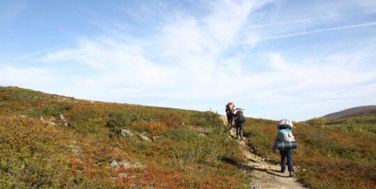 vaelluskurssi lappi polku nature tours